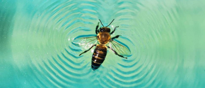 Decipher the super 'surfing' ability in bees